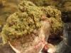 paleo-maple-basil-venison-meatballs-006